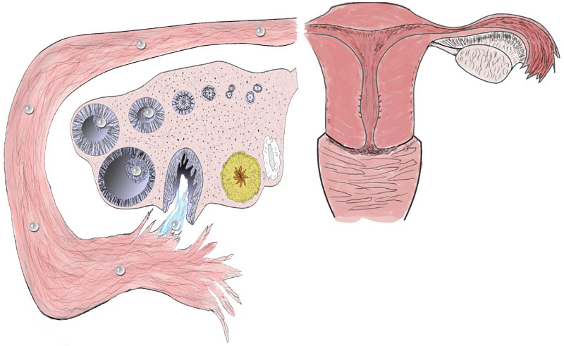 Does clomid cause cramping during ovulation